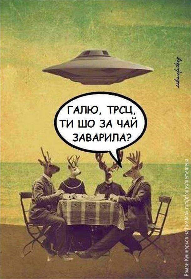 Сидять чотири олені за столом і п'ють чай. Над німи літає НЛО. Один з оленів каже: - Галю, трсц, ти шо за чай заварила?