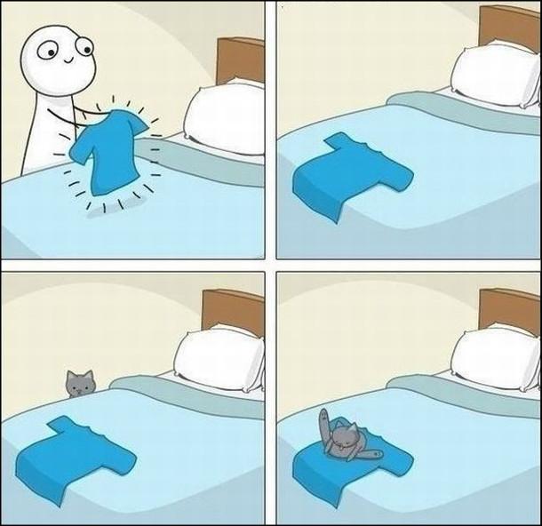 Тільки-но покладеш чисту випрану футболку, як одразу на неї вилізе кіт і почне вмиватись