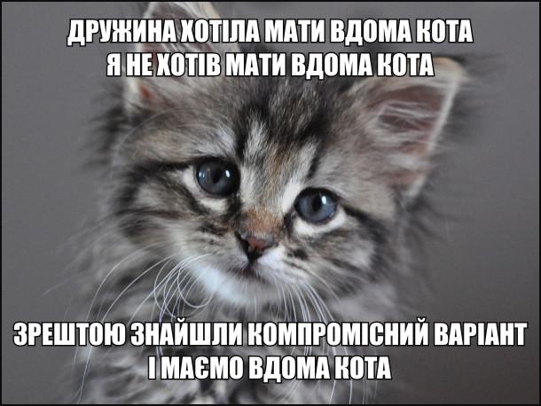 Дружина хотіла мати вдома кота. Я не хотів мати вдома кота. Зрештою знайшли компромісний варіант і маємо вдома кота