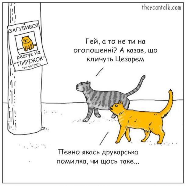 Гумор про котів. Оголошення: Загубився кіт, реагує на Пиріжок. Підходять два коти. Один: - Гей, а то не ти на оголошенні? А казав, що кличуть Цезарем. Інший: - Певно якась друкарська помилка, чи щось таке...