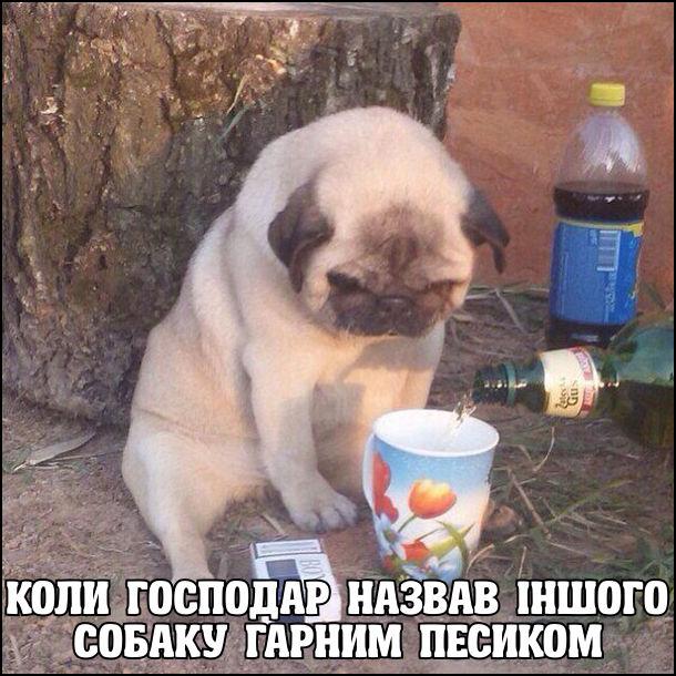 Жарт Сумний мопс. Коли господар назвав іншого собаку гарним песиком. На фото: задумливий пес, якому наливають пиво в чашку