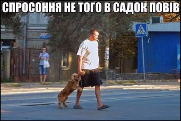 Спросоння не того в садок повів. На фото: чоловік веде собаку за передню лапу. Собака йде на задніх, немов дитина
