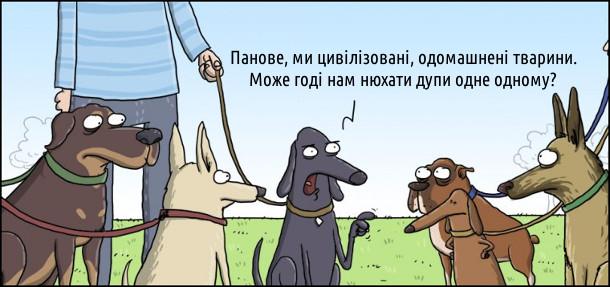 Смішний малюнок Собачі збори. Зійшлися собаки на зборах. Один каже: - Панове, ми цивілізовані, одомашнені тварини. Може годі нам нюхати дупи одне одному?