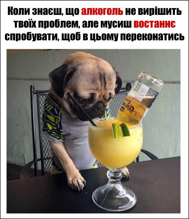 Коли знаєш, що алкоголь не вирішить твоїх проблем, але мусиш востаннє спробувати, щоб в цьому переконатись. Песик мопс і коктейль.
