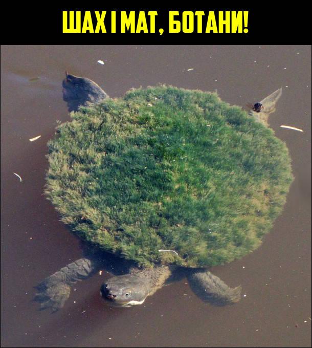 Докази що земля пласка: пливе черепаха, в якої на панцирі росте трава. Шах і мат, ботани!