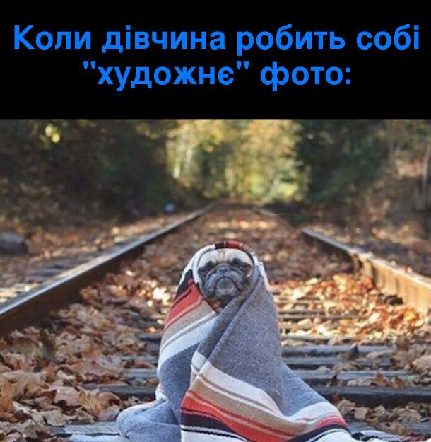 """Коли дівчина робить собі """"художнє"""" фото. Мопс в пледі сидить між залізничними рельсами"""