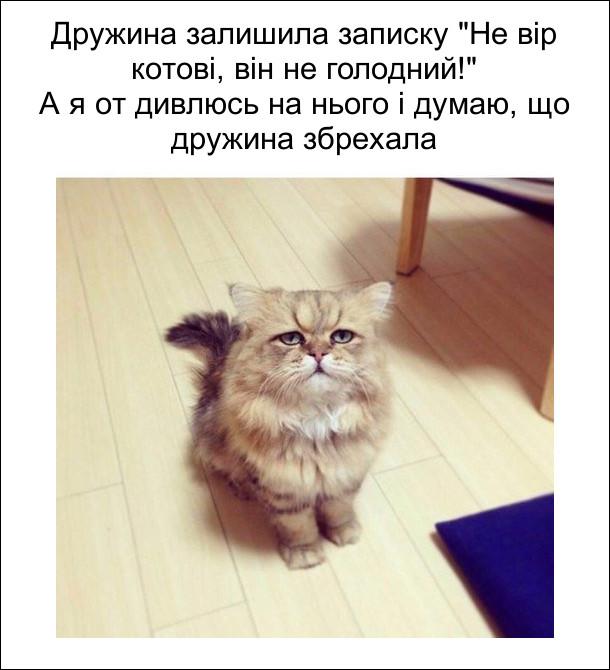 """Дружина залишила записку """"Не вір котові, він не голодний!"""" А я от дивлюсь на нього і думаю, що дружина збрехала. На фото: кіт зі страдальницьким обличчям"""