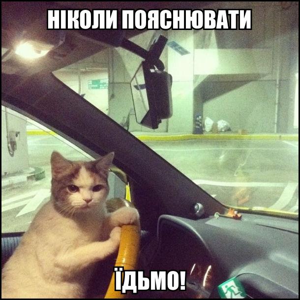 Кіт за кермом: Ніколи пояснювати. Їдьмо!
