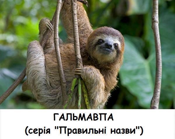 Гальмавпа (лінивець). Серія Правильні назви
