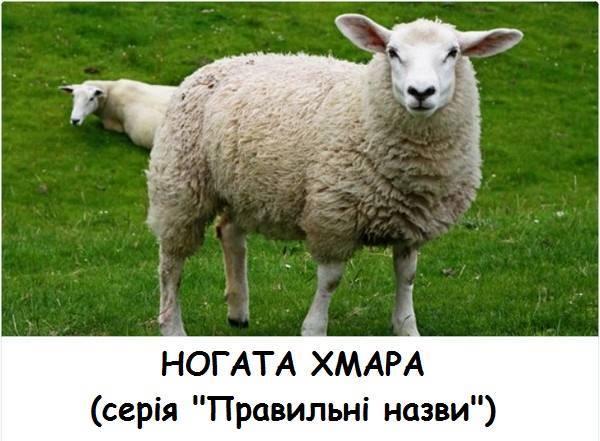 Ногата хмара (вівця). Серія Правильні назви