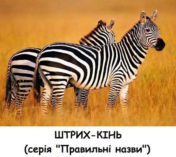 Штрих-кінь (Зебра). Серія Правильні назви