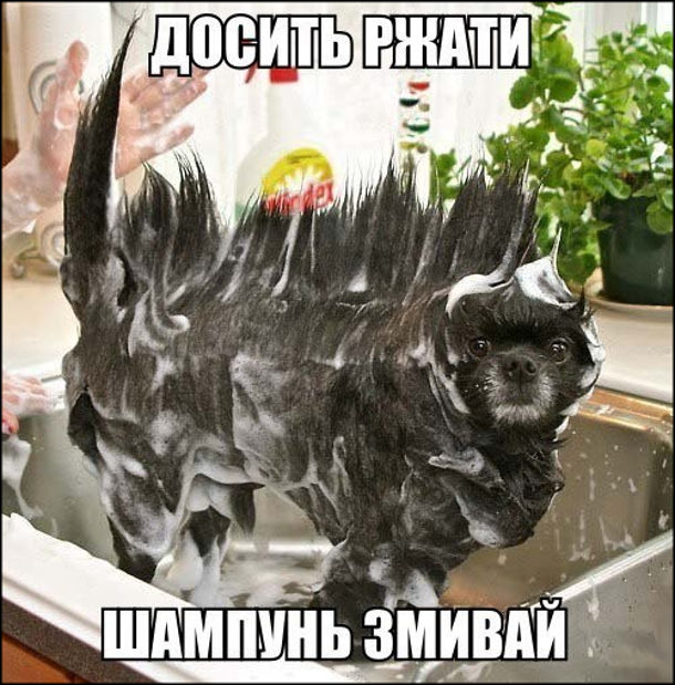 Досить ржати, шампунь змивай! На фото: в раковині мокрий намилений собака з чудернацькою зачіскою