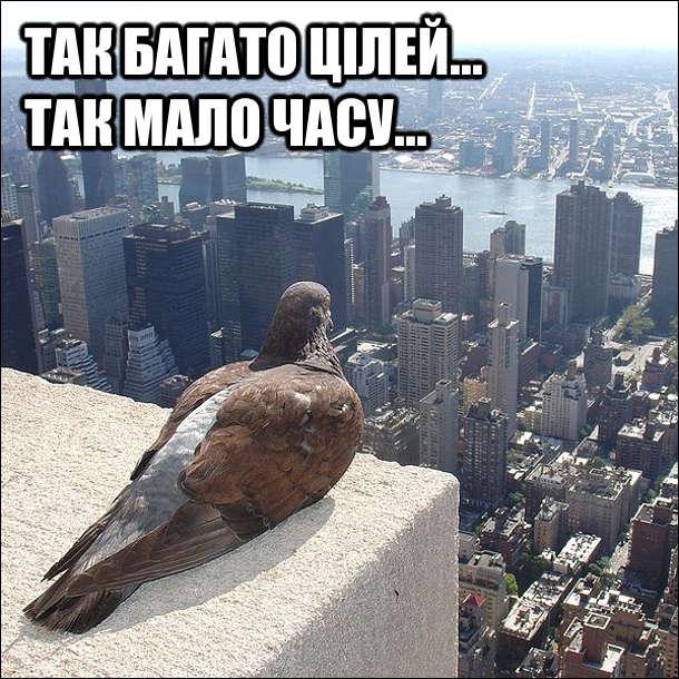 Голуб сидить на балконі і дивиться на Нью-Йорк. Так багато цілей... Так мало часу...
