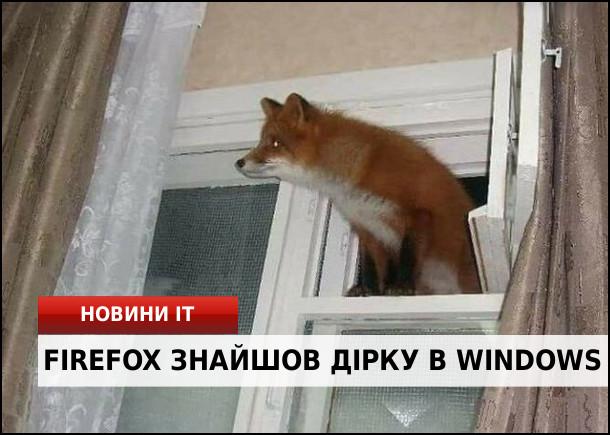 Новини IT: Firefox знайшов дірку в Windows. Лисиця (firefox) залізла крізь прочинену кватирку у вікні (window)