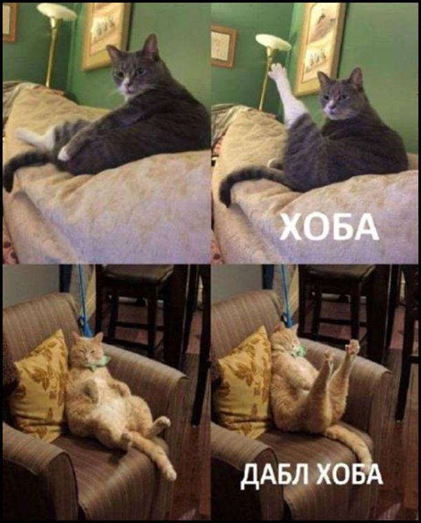 Кіт - Хоба! (витягнув лапу) - Дабл хоба! (витягнув обидві лапки)