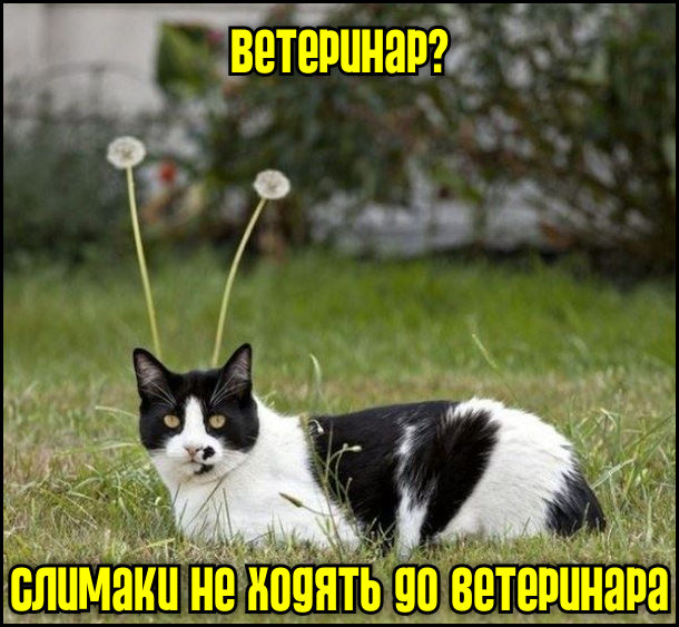 Сидить кіт а ззаді нього дві кульбаби неначе ріжки слимака. Кіт: - Ветеринар? Слимаки не ходять до ветеринара