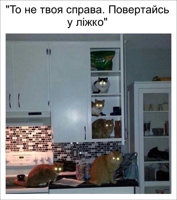 Коли вночі зайшов до кухні коти сидять на столі і на поличках, виблискуючи очима. То не твоя справа. Повертайсь у ліжко