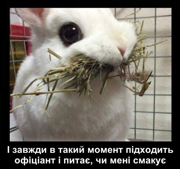 І завжди в такий момент підходить офіціант і питає, чи мені смакує. На фото: кролик з повним ротом трави.