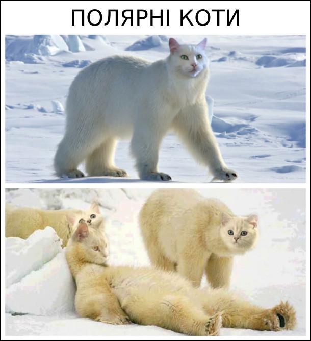 Полярні коти - голова котяча, а тіло - білого ведмедя