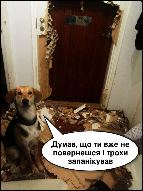 Собака нашкодив: обгриз вхідні двері. - Думав, що ти вже не повернешся і трохи запанікував