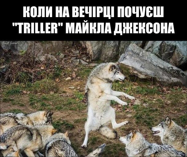 """Коли на вечірці почуєш """"Triller"""" Майкла Джексона. Вовк танцює"""