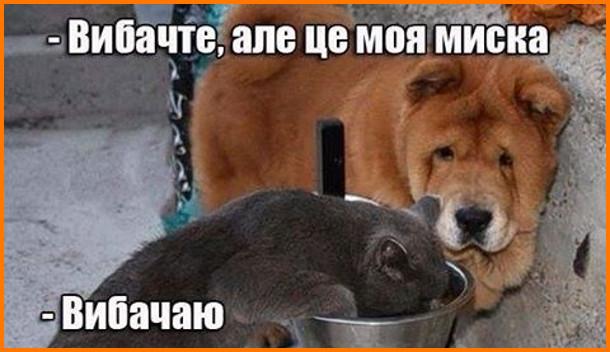 Кіт їсть з собачої миски. Підходить собака: - Вибачте, але це моя миска. Кіт: - Вибачаю