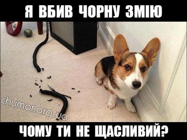 Пес сидить біля перегризеного кабелю: - Я вбив чорну змію. Чому ти не щасливий?