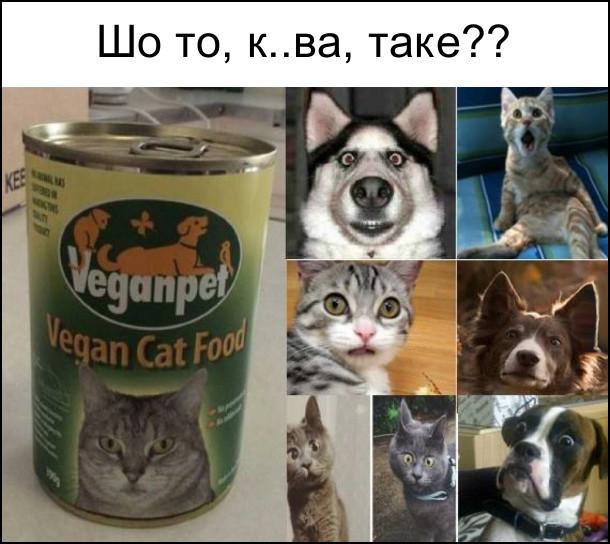 Реакція тварин на веганський корм. Шо то, курва, таке?? Коти і собаки шоковані