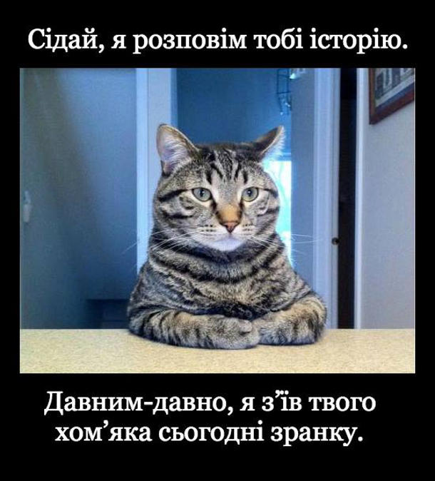 Кіт: - Сідай, я розповім тобі історію. Давним-давно, я з'їв твого хом'яка сьогодні зранку