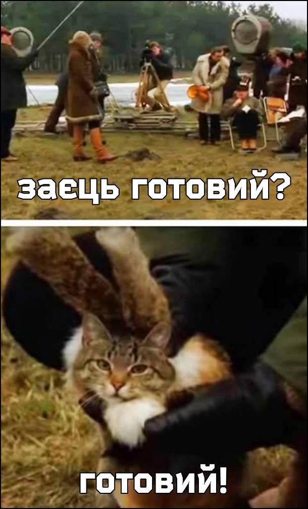 Йде кінознімання. Режисер: - Заєць готовий? - Готовий. Кіт з накладними вухами, замаскований під зайця