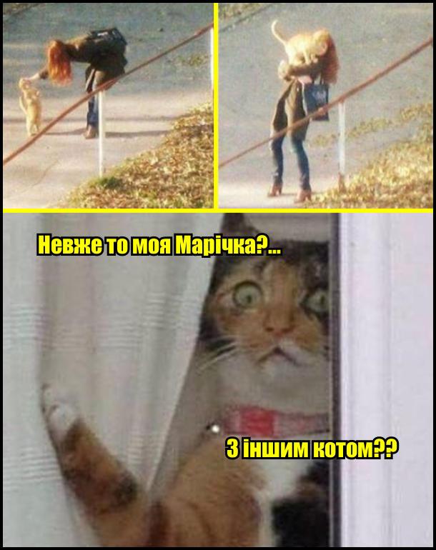 Кіт крізь вікно побачив, як його господиня взяла на руки кота. - Невже то моя Марічка?... З іншим котом??