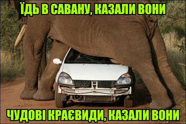 Їдь в савану, казали вони. Чудові краєвиди, казали вони. Слон виліз на машину (певно прийняв са самицю)