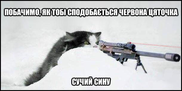 Кіт засів з рушницею з лазерним прицілом. - Побачимо, як тобі сподобається червона цяточка, сучий сину