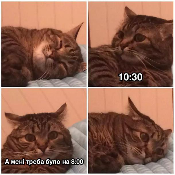 Кіт спить, потім прокидається і дивиться на годинник: - 10:30, а мені треба було на 8:00
