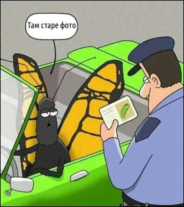 Метелика на машині зупиняє патрульний. Метелик показує йому водійське посвідчення, де на фото гусінь. Метелик пояснює: - Це старе фото