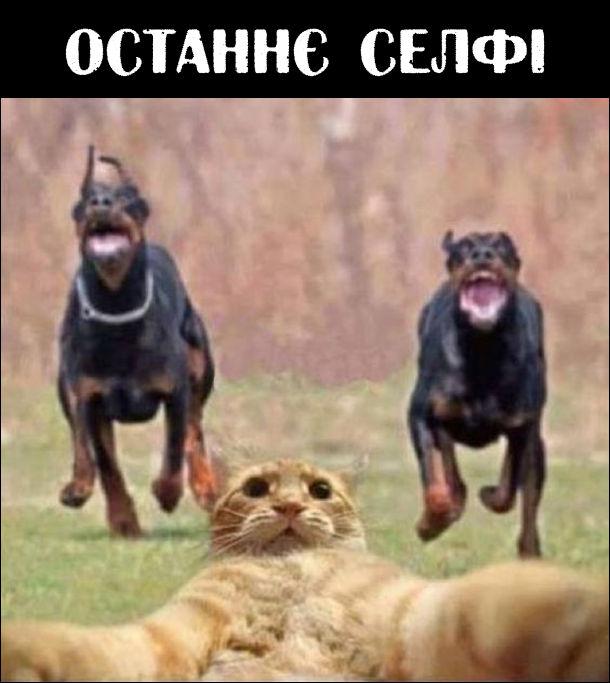 Останнє селфі. Кіт робить селфі, а позаду до нього біжать дві здоровезні собаки