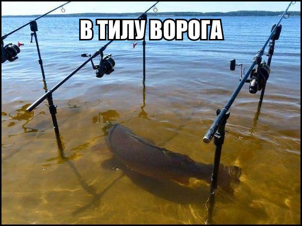Риба плаває в тилу ворога - тем де мають стояти рибалки