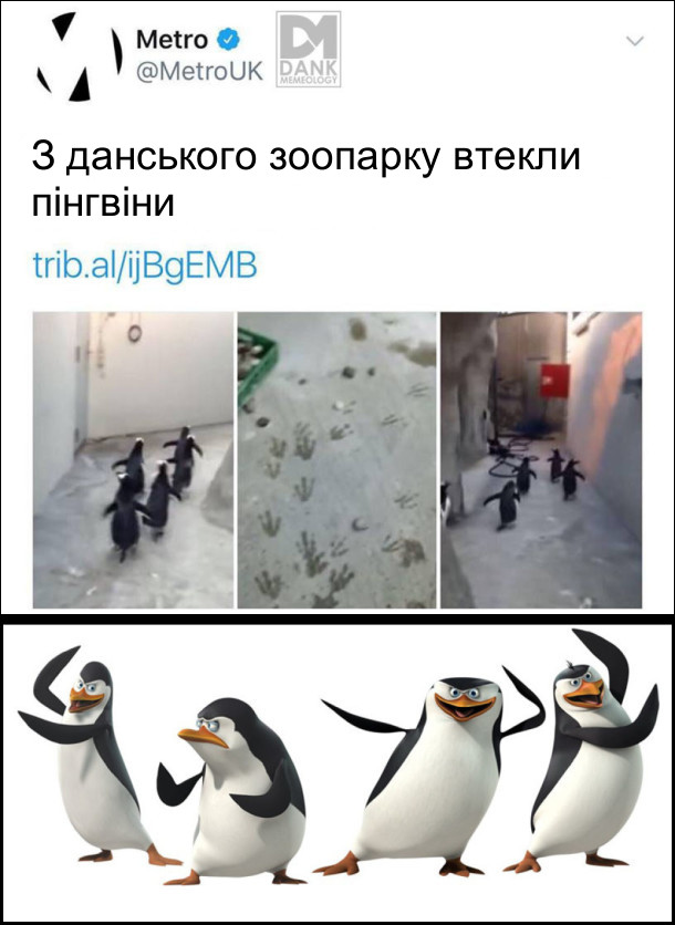 З данського зоопарку втекли пінгвіни. Неначе з мультфільму Мадагаскар