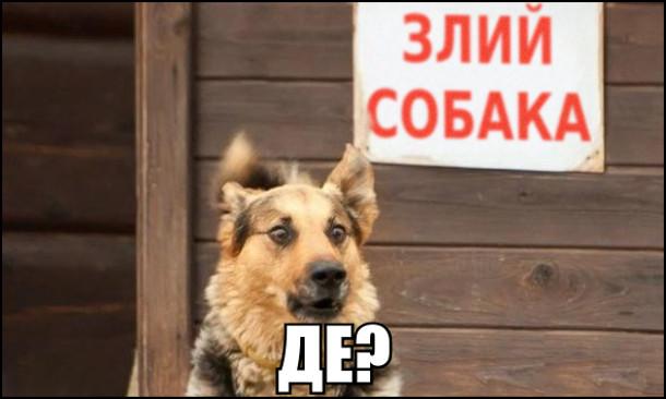 Табличка Злий собака. Пес глянув на неї і перелякано: - Де?