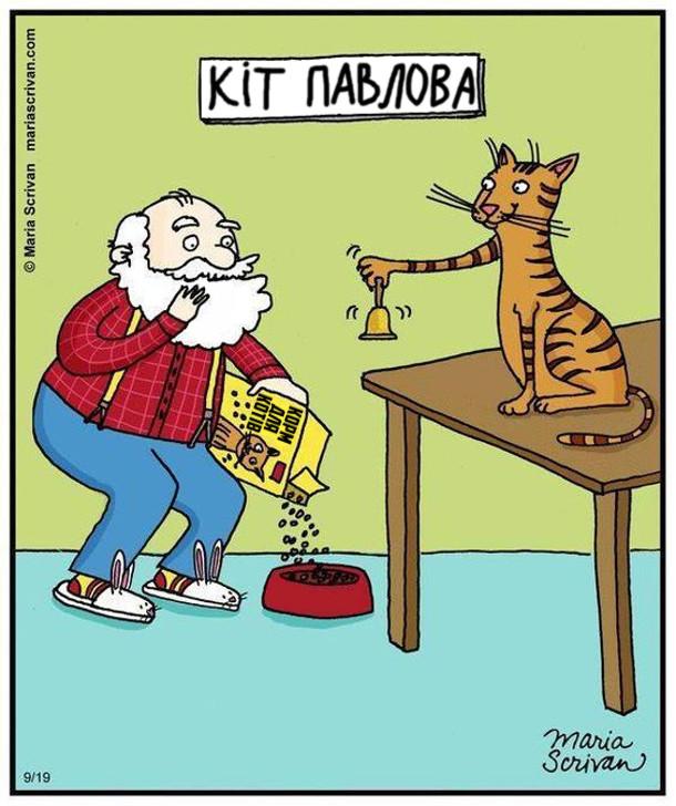 Кіт Павлова подзвонив у дзвоник. Прибіг Павлов і насипав корм для котів в мисочку