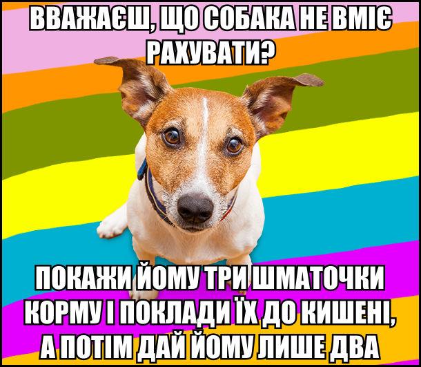 Вважаєш, що собака не вміє рахувати? Покажи йому три шматочки корму і поклади їх до кишені, а потім дай йому лише два