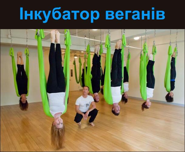 Інкубатор веганів. На фото: заняття з йоги в дивних позах
