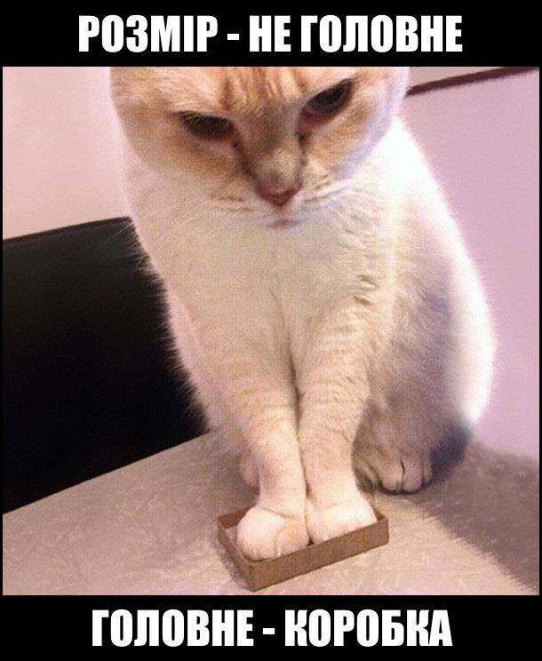 Розмір - не головне. Головне - коробка. Кіт поставив дві передні лапки в сірникову коробку