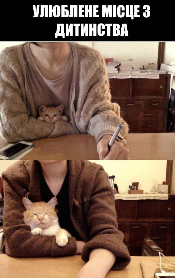 Улюблене місце з дитинства. Кошеня сидить сидить на руках в господині. Кошеня виросло і стало котом, але досі любить сидіти на колінах