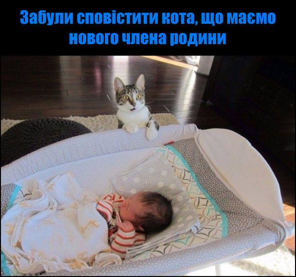 Забули сповістити кота, що маємо нового члена родини. Кіт здивований коли побачив немовля в колисці