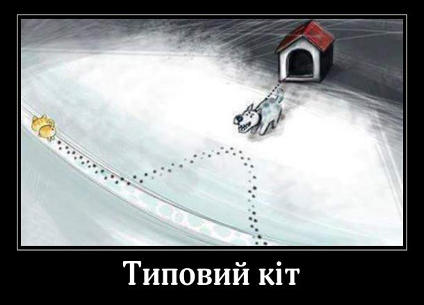 Типовий кіт: йшов по стежині і коли проходив повз собачу буду, де собака на ланцюгу, звернув з доріжки і пройшов біля самого собаки, щоб подражнити його