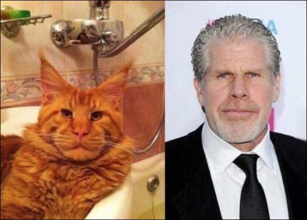 Кіт схожий на Рона Перлмана