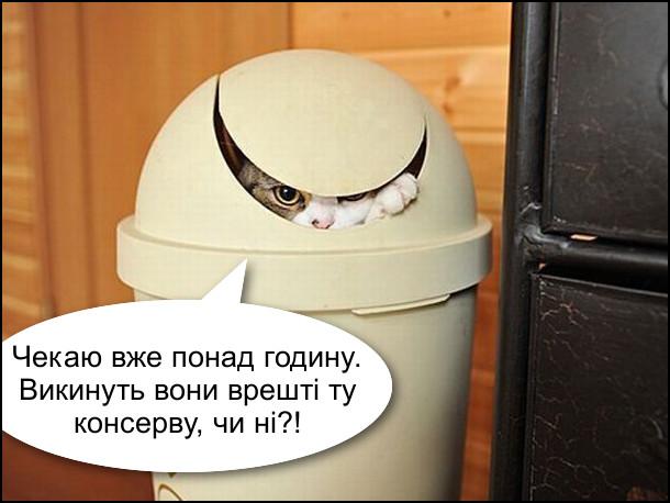 Кіт сидить в сміттєвому відрі на кухні: - Чекаю вже понад годину. Викинуть вони врешті ту консерву, чи ні?!