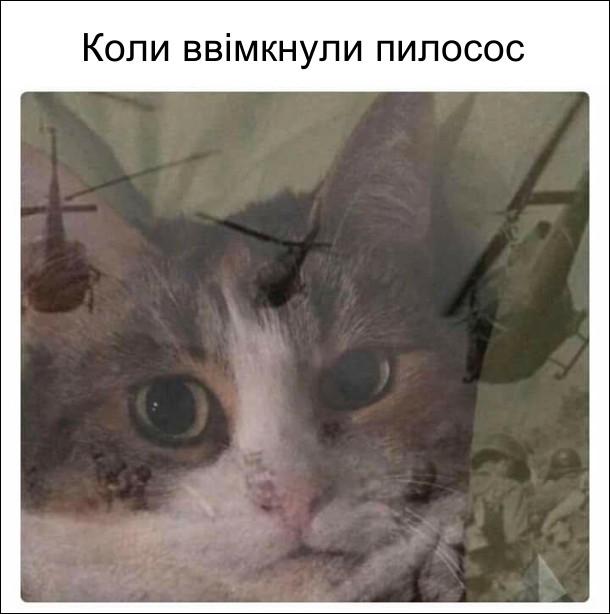 Коли ввімкнули пилосос. Переляканий кіт: йому ввижаються гелікоптери і солдати