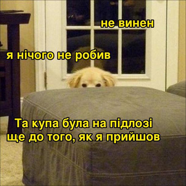 Собака виглядає з-за дивана: - Не винен. Я нічого не робив. Та купа була на підлозі ще до того, як я прийшов